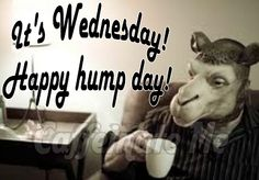 wednesday happy hump day
