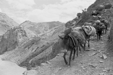 Pack_Horses_on_Hemis_Trail